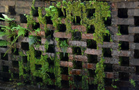 Mossy Wall_7381